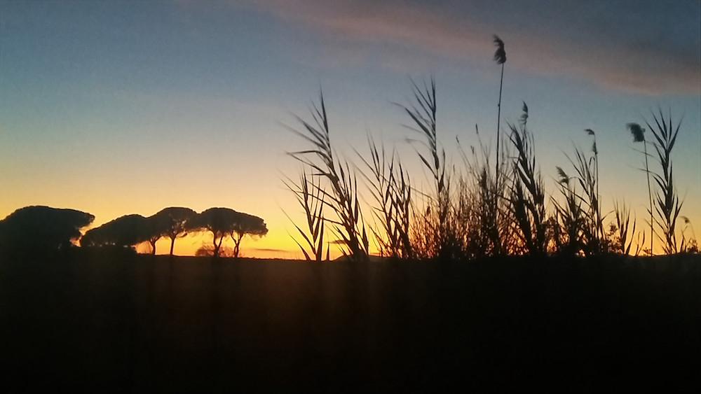 """""""Fantasie al tramonto"""" di Daniela Andreotti"""